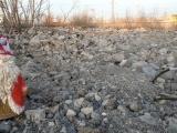 ОНФ обратился в прокуратуру по поводу формальной ликвидации свалок около аэропорта в Чебоксарах