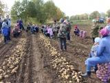 Зерновых в Чувашии собрали на треть меньше
